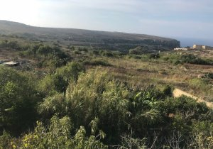Gozo real estate: House of Character in Qala malta, property malta, letting malta, real estate malta, simon mamo malta